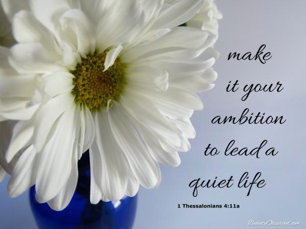 daisy-quiet-life